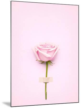 Creative Valentines Day Still Life Concept, Pink Rose in Greeting Card on Pink Paper- Fisher Photostudio-Mounted Photographic Print