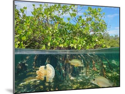 Mangrove Above and Below Water Surface, Half and Half, Caribbean Sea-Seaphotoart-Mounted Photographic Print