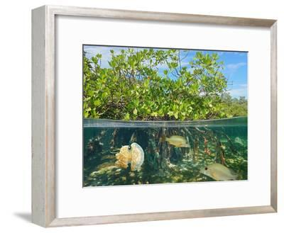 Mangrove Above and Below Water Surface, Half and Half, Caribbean Sea-Seaphotoart-Framed Photographic Print
