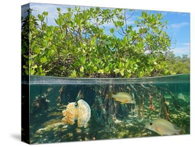 Mangrove Above and Below Water Surface, Half and Half, Caribbean Sea-Seaphotoart-Stretched Canvas Print