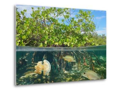Mangrove Above and Below Water Surface, Half and Half, Caribbean Sea-Seaphotoart-Metal Print