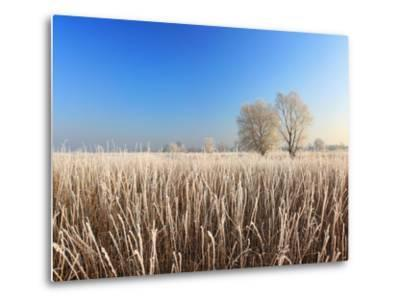 Misty Morning with Frost on the River in Early Spring-Anton Petrus-Metal Print