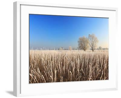 Misty Morning with Frost on the River in Early Spring-Anton Petrus-Framed Photographic Print