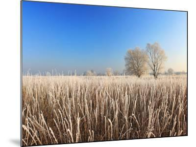 Misty Morning with Frost on the River in Early Spring-Anton Petrus-Mounted Photographic Print