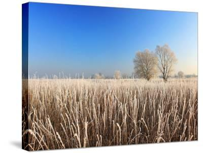 Misty Morning with Frost on the River in Early Spring-Anton Petrus-Stretched Canvas Print
