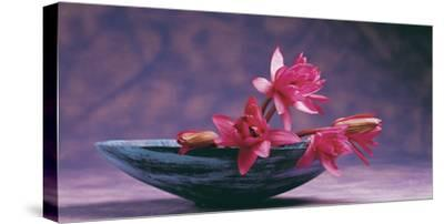 Pink Lotus Flower in Bowl, India, Asia- Dinodia Photos-Stretched Canvas Print
