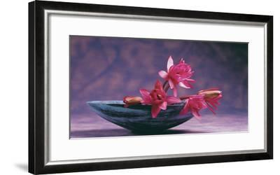 Pink Lotus Flower in Bowl, India, Asia- Dinodia Photos-Framed Photographic Print