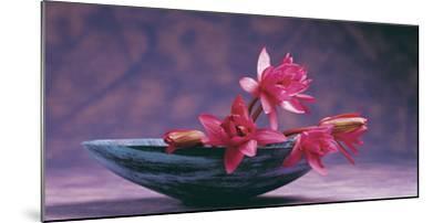 Pink Lotus Flower in Bowl, India, Asia- Dinodia Photos-Mounted Photographic Print