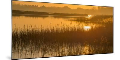 Dawn on the River Alde-Martin Wilcox-Mounted Photographic Print