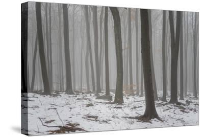 Forest in the Mist at Thaw Sleza Mount Landscaped Park- Shapencolour-Stretched Canvas Print