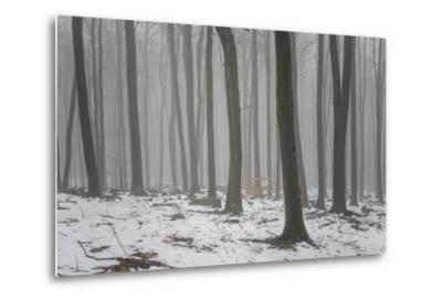 Forest in the Mist at Thaw Sleza Mount Landscaped Park- Shapencolour-Metal Print