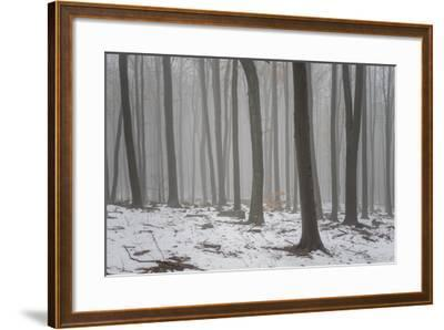 Forest in the Mist at Thaw Sleza Mount Landscaped Park- Shapencolour-Framed Photographic Print