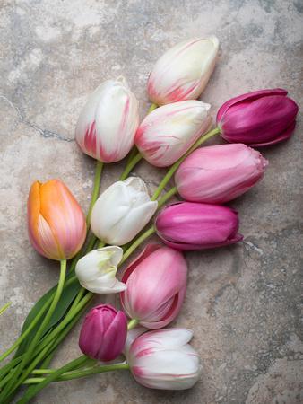 French Tulips on Stone Table-Georgianna Lane-Framed Photographic Print