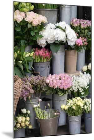 Spring Flowers Including Lilacs, Hydrangea, Ranunculus and Roses-Georgianna Lane-Mounted Photographic Print
