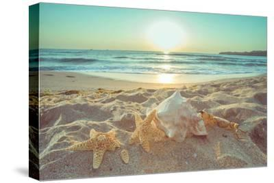 Starfish and Shells on the Beach at Sunrise-Deyan Georgiev-Stretched Canvas Print