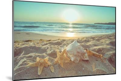 Starfish and Shells on the Beach at Sunrise-Deyan Georgiev-Mounted Photographic Print
