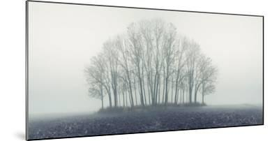 Small Forest in Autumn Foggy Morning-Konrad B?k-Mounted Photographic Print