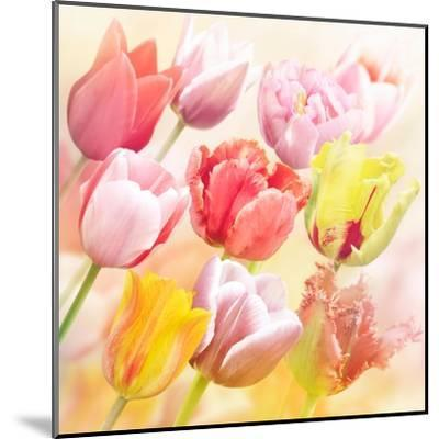 Tulips Flowers Close Up for-Svetlana Foote-Mounted Art Print