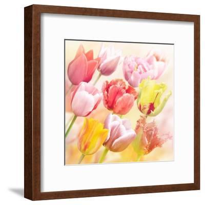 Tulips Flowers Close Up for-Svetlana Foote-Framed Art Print