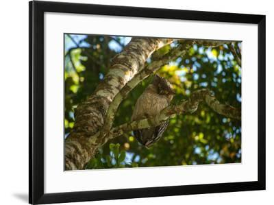 A Brown Fish Owl, Bubo Zeylonensis, Perches on a Tree Branch-Prasenjeet Yadav-Framed Photographic Print