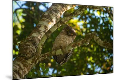 A Brown Fish Owl, Bubo Zeylonensis, Perches on a Tree Branch-Prasenjeet Yadav-Mounted Photographic Print