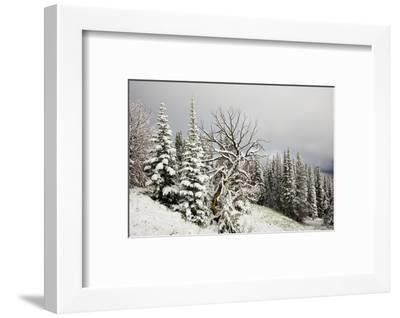 Fallen Snow in Beartooth, Wyoming-Charlie James-Framed Photographic Print