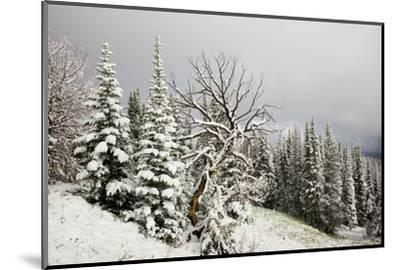 Fallen Snow in Beartooth, Wyoming-Charlie James-Mounted Photographic Print