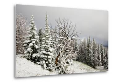 Fallen Snow in Beartooth, Wyoming-Charlie James-Metal Print