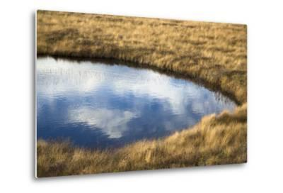 A Pond in a Boreal Forest on Fogo Island-Pete Ryan-Metal Print
