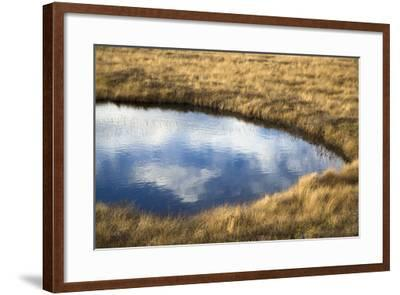 A Pond in a Boreal Forest on Fogo Island-Pete Ryan-Framed Photographic Print