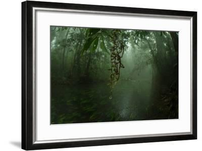 Water Drips Off Vines in a Rainforest-Prasenjeet Yadav-Framed Photographic Print