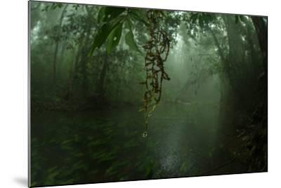 Water Drips Off Vines in a Rainforest-Prasenjeet Yadav-Mounted Photographic Print