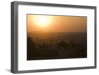 A Setting Sun and Silhouetted Camels at the Pushkar Camel Fair-Steve Winter-Framed Photographic Print