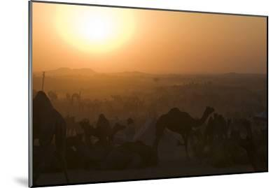 A Setting Sun and Silhouetted Camels at the Pushkar Camel Fair-Steve Winter-Mounted Photographic Print