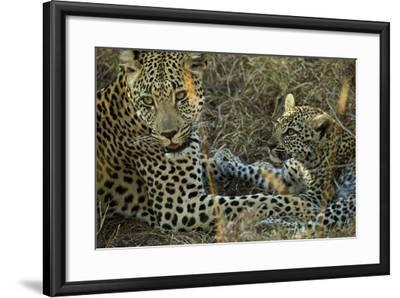 A Female Leopard Rests with Her Cub in Sabi Sand Game Reserve-Steve Winter-Framed Photographic Print