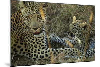 A Female Leopard Rests with Her Cub in Sabi Sand Game Reserve-Steve Winter-Mounted Photographic Print
