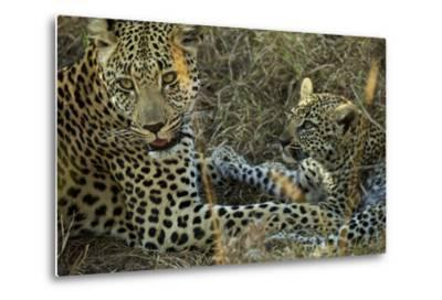 A Female Leopard Rests with Her Cub in Sabi Sand Game Reserve-Steve Winter-Metal Print