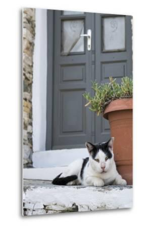 A Local Cat Rests in Front of a Doorway-Krista Rossow-Metal Print