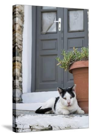 A Local Cat Rests in Front of a Doorway-Krista Rossow-Stretched Canvas Print