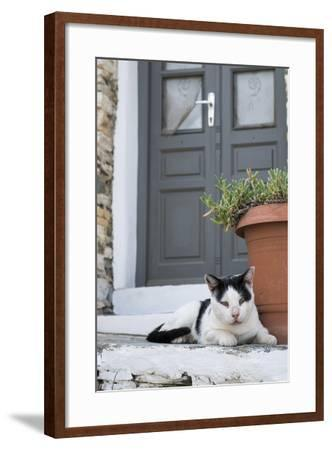 A Local Cat Rests in Front of a Doorway-Krista Rossow-Framed Photographic Print