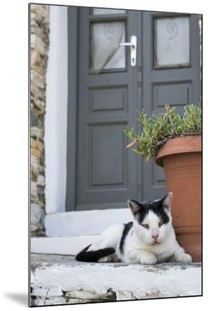 A Local Cat Rests in Front of a Doorway-Krista Rossow-Mounted Photographic Print