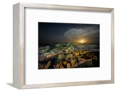 Submerged Endangered Elkhorn Coral in Garden of the Queen National Marine Park-Jennifer Hayes-Framed Photographic Print