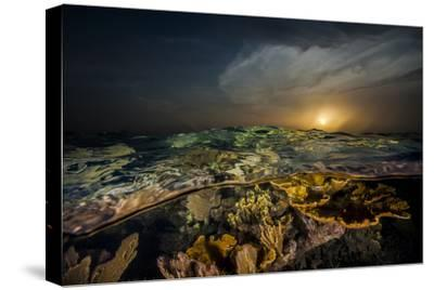 Submerged Endangered Elkhorn Coral in Garden of the Queen National Marine Park-Jennifer Hayes-Stretched Canvas Print