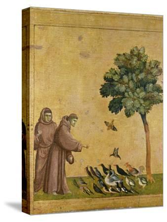 St. Francis of Assisi preaching to the birds. Ca. 1295-1300 (Predella, see also Image ID 19398)--Stretched Canvas Print