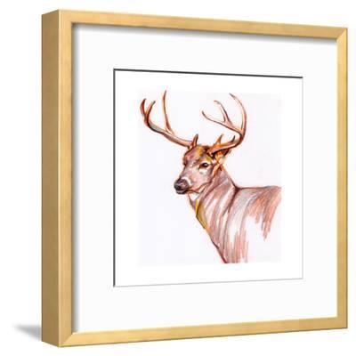 Deer in Pencil-Anne Seay-Framed Art Print