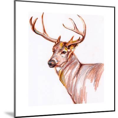 Deer in Pencil-Anne Seay-Mounted Art Print