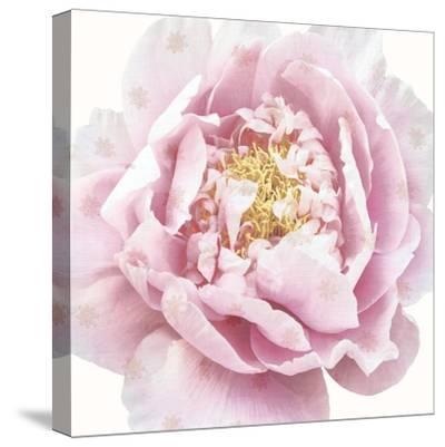 Whisper Floral-Bella Dos Santos-Stretched Canvas Print