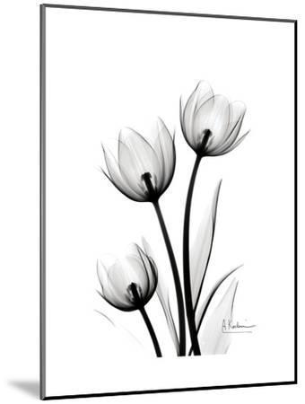 Tulips High Contrast-Albert Koetsier-Mounted Art Print