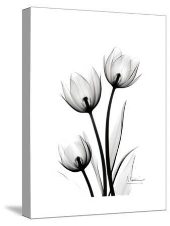 Tulips High Contrast-Albert Koetsier-Stretched Canvas Print