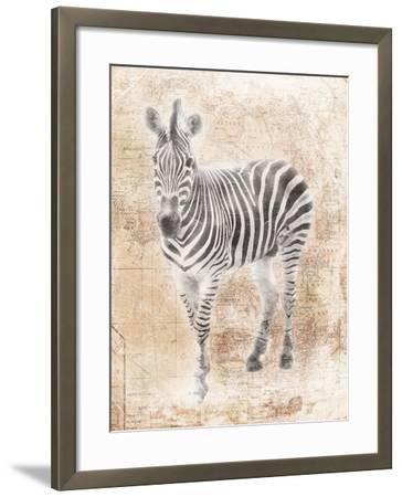 African Zebra-Jace Grey-Framed Art Print